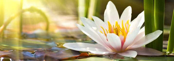 Chiropractic Hutchinson KS Wellness Flower