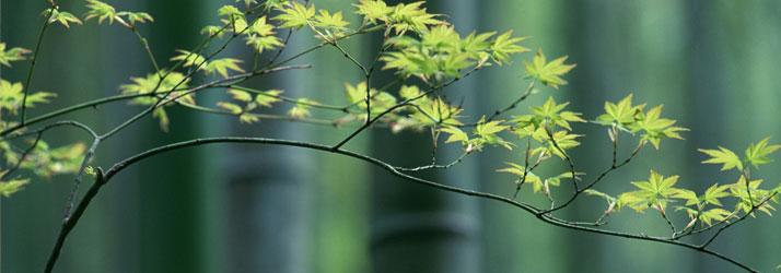 Chiropractic Hutchinson KS Wellness Tree